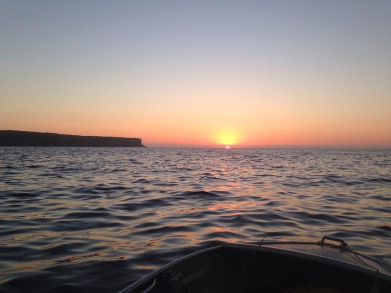 Sydney Harbour Surface Fish 1st March 2015
